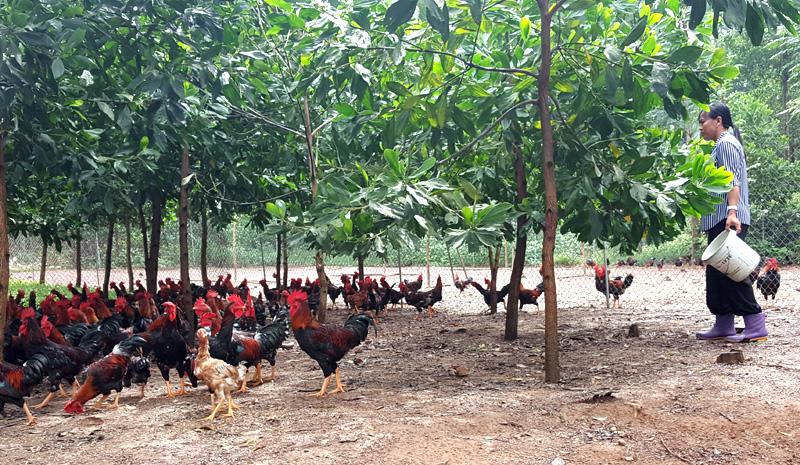 kinh doanh nông nghiệp